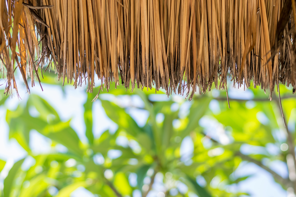 Palapas and sustainable architecture at the beach