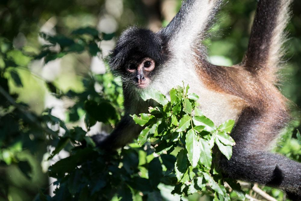 Fauna in the Sian Ka'an Biosphere - Mammals