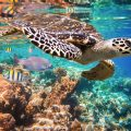 Endangered Species - Protecting Turtles in Sian Ka'an