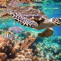 Endangered Species - Protecting Turtles in Sian Ka'an