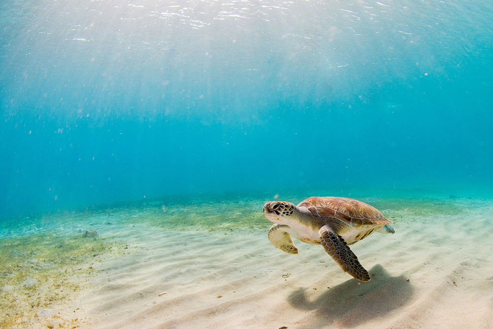 How Turtles are Being Protected in Sian Ka'an