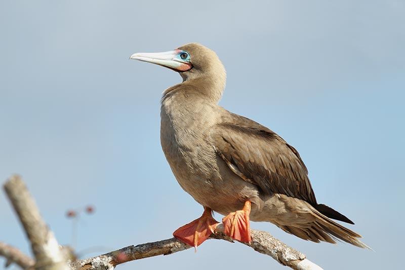 Rare and Threatened Fauna